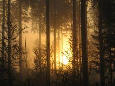 aave metsä - Aamulehden kuvakisa