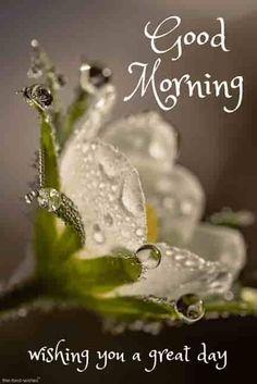 Wet white flower hd gm wishes. Good Morning Romantic, Good Morning Kisses, Good Morning Beautiful Pictures, Good Morning Nature, Good Morning Love Messages, Good Morning Images Hd, Good Morning Texts, Good Morning Good Night, Morning Messages