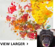 Winners of Chimpanzee Art Contest Announced - The Humane Society of the United States