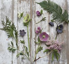 Hellebores with flowers & foliage that compliments. Woodland Garden Treasures by Georgianna Lane