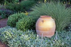 In this handsome summer-dry garden a garden urn is backed by Miscanthus sinensis 'Morning Light' and mounds of Olea europaea 'Little Ollie' above a silvery carpet of Stachys byzantina 'Big Ears'. Garden Urns, Australian Native Garden, Small Courtyard Gardens, Stachys Byzantina, Courtyard Landscaping, Garden Photography, Mediterranean Garden, Dry Garden, Australian Garden