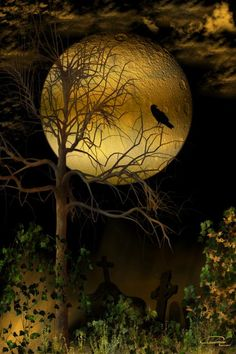 Crow and the Harvest Moon