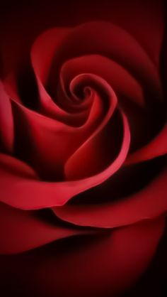 Beautiful Red Rose Wallpapers Iphone 5 Hd Very Cranberry Rose