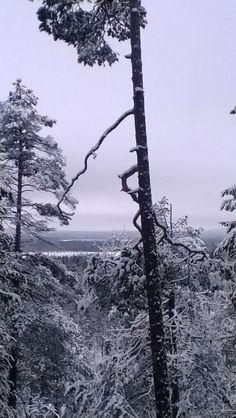 Pyhätunturi   ~Finnish nature through my eyes - Sari Lapikisto