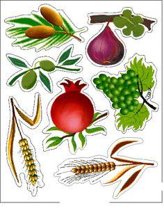 The 7 Species: date, fig, olive, pomegranate, grape, barley, wheat - שבעת המינים