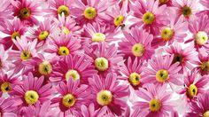 Pre tvorbu krásnych kvetov je nevyhnutné vyštipovanie