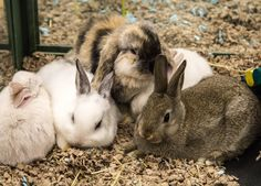 bunny family nice selfie wow........... http://ift.tt/2m8b1jb