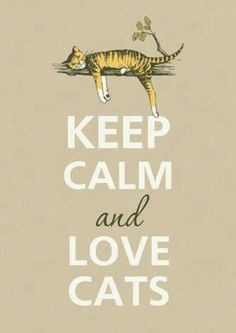 Love cats♥