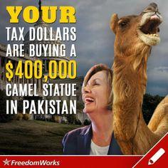 Pelosi is a camel!