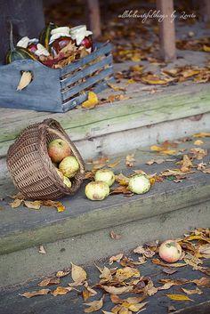 Samain:  Harvest for #Samain.