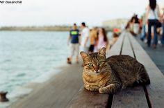 This is the local harbor cat in Tel Aviv's harbor (Israel).