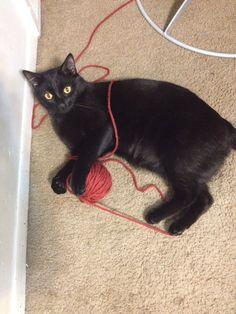 C.K.Dexter Haven has been caught! Cute black cat