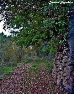 Torá de Riubregós senderos