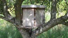 Comment piéger un essaim d'abeilles Mai 2015