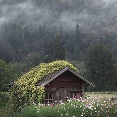 Photo by @peterlundqvist - Location: Skagit County, WA #thetrickytree