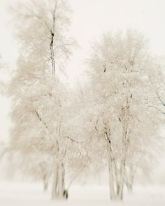 Winter Photography Snow on Bare Tree by EyePoetryPhotography