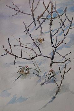 Darren Woodhead - Arctic & Common Redpoll, Vadsø.