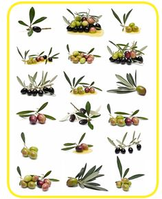 Find Olives Collection Isolated On White Background stock images in HD and millions of other royalty-free stock photos, illustrations and vectors in the Shutterstock collection. Thousands of new, high-quality pictures added every day.