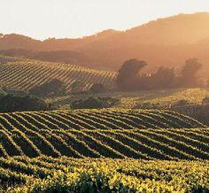Napa Valley, California. Wine tour, please!