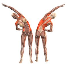 Right bend - Salamba Konasana right - Yoga Poses   YOGA.com