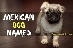 Mexican Dog Names: 101+ Most Popular Male and Female Names for Dog