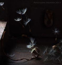 new life by Elena Eremina on 500px