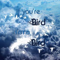 #bird #sky #cloud #white #quotes