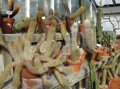 Cactus beauties
