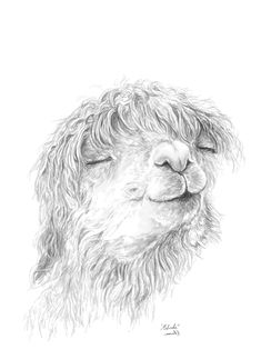 Llama and alpaca drawings and paintings by Nashville artist Kristin Llamas. Available as art prints, pillows, mugs at LlamasArt.com. Colouring Pics, Coloring, Animal Paintings, Animal Drawings, Alpaca Drawing, Alpaca Pictures, Llama Arts, Lamas, Llama Print