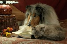 Dogs and cats reading together!