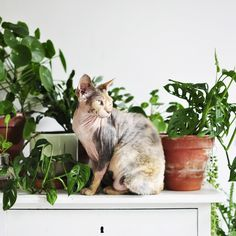 Living with plants and cats indoor jungle сад Cat Plants, House Plants, Cat Template, Chinese Money Plant, Flora Und Fauna, Leaf Photography, Plant Aesthetic, Cat Sitting, Pet Names