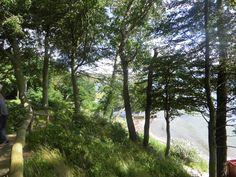 Ture af smukke skovveje. Med en dejlig udsigt til Lillebælt