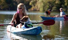Kayaking dog