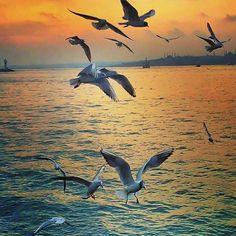 Istanbul, Bird, Beach, Animals, Animales, The Beach, Animaux, Birds, Beaches