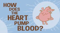 TEDed Talk: How does the heart pump blood?