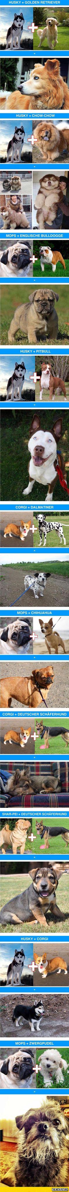 Awesome Dog Cross-Breeds