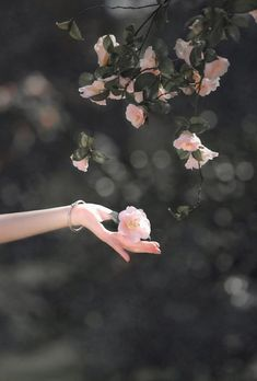 Hand Photography, Autumn Photography, Girl Photography Poses, Creative Photography, Flower Phone Wallpaper, Cute Wallpaper Backgrounds, Pretty Wallpapers, Beautiful Nature Wallpaper, Beautiful Flowers