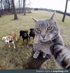 This cat takes better selfies than most people