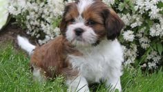 The Cutest Cross Breeds You Will Ever See   Knowledge Dish - Part 3