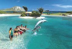 dolphin adventure sea life park Oahu hawaii