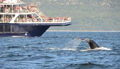 Plouf plouf plouf. A Tadoussac au Québec solidement accroché au bord d'un Zodiac c'est à la rencontre des baleines dauphins bélougas et phoques que vous partez à l'aventure. Un ballet incessant d'une grâce inouïe qui vous laissera marqué à vie! @tourismequebec @whalesofinstagram #whale #boat #quebec