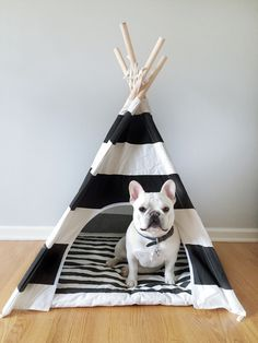 Theo's new napping quarters. Theobonaparte. Teepees by thepolkadog.