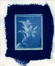 Day Lillies - Favini 340gsm Water Colour Paper. Cyanotype.