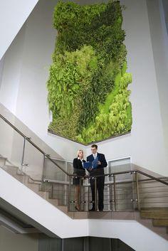 Cuadros verdes de la pared - Vida de foto de la pared e imágenes - Vancouver