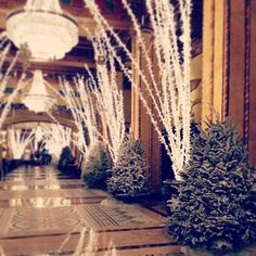 Step Two: Decorate all 44 Flocked Trees and 21 Birch Trees with a minimum of 2,000 ornaments! #WaldorfWonderland #RooseveltStories #rooseveltneworleans #holidays
