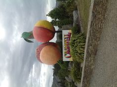 Giant fruit in Cromwell, NZ