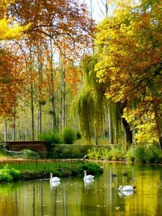 ♥Autumn at the Chateau de Cheverny. France