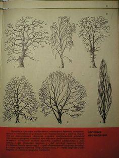 Шаблоны. Антураж. Деревья. Архитектурная графика.: ms_crazy_smile