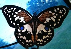 Hand painted butterfly stained glass (detail)  Particolare di farfalla dipinta su vetro con grisaglia e smalti Stained Glass Panels, Butterflies, Hobbies, Hand Painted, Handmade, Painting, Shop Signs, Stained Glass Windows, Hand Made