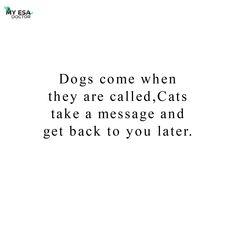 But no matter what we love our fur babies the most, Don't we? #cat_imatges #myesadoctor #esa #pleasantcats #catsofgram #meowsandwoofs #funpetloveclub #ig_catclub #catstocker #bestphotogram_dogs #pawproject #my_loving_pet #huskylover #huskydog #huskyworld #huskypuppies #huskypup #huskysofinstagram #goldensoninstagram #thedailygolden #puppysketch #instadogsfeature #goldenoftheday #welovegoldens #retrieversofinstagram #badasspugclub #speakpug #thetomcoteshow #pugbasement #purepugspp